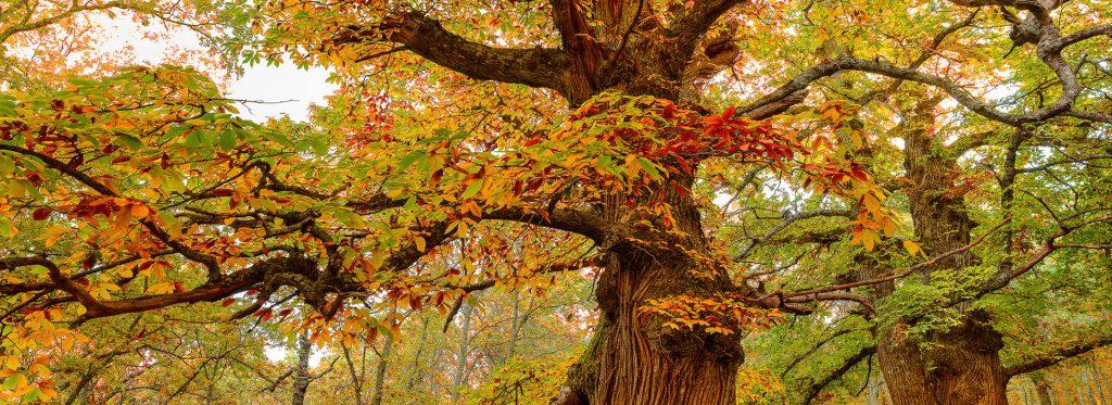 3 destinos ideales para disfrutar del otoño en España