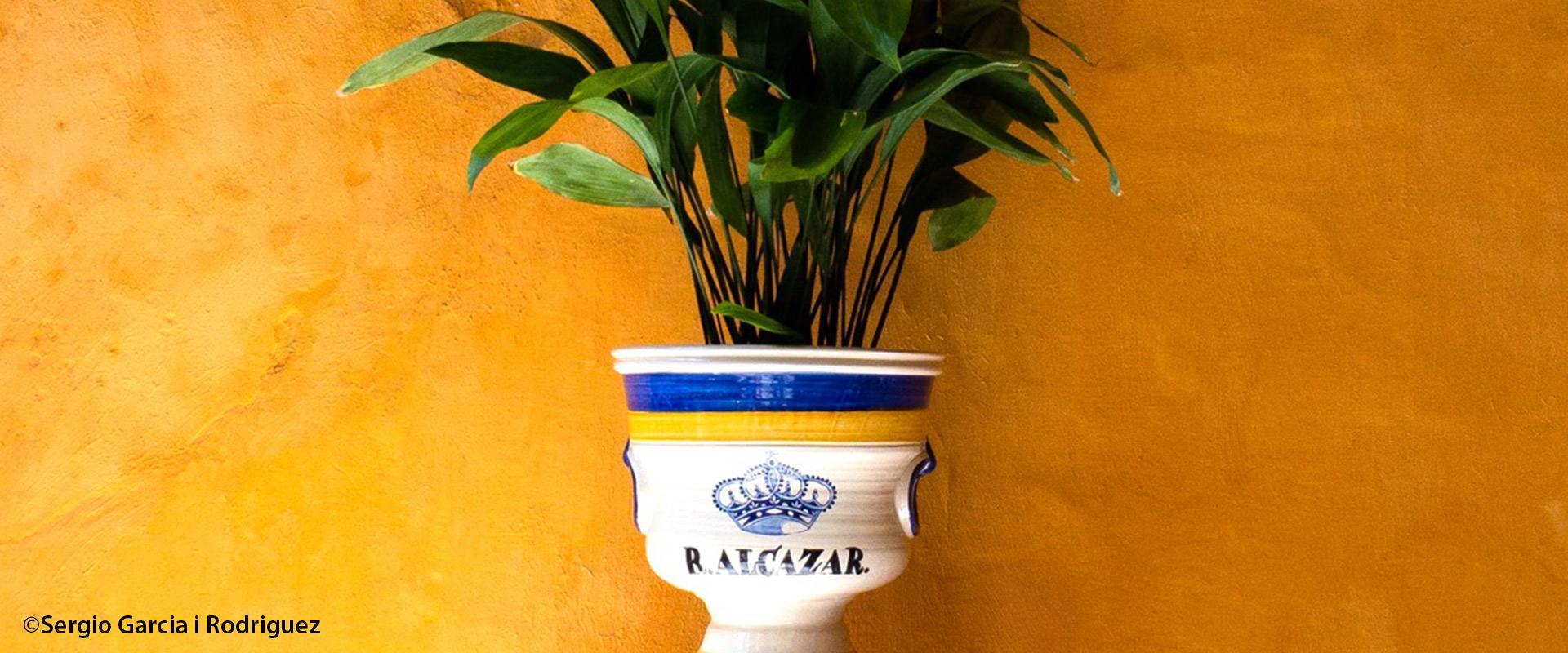 Viaje al amarillo albero, uno de los colores especiales de Sevilla