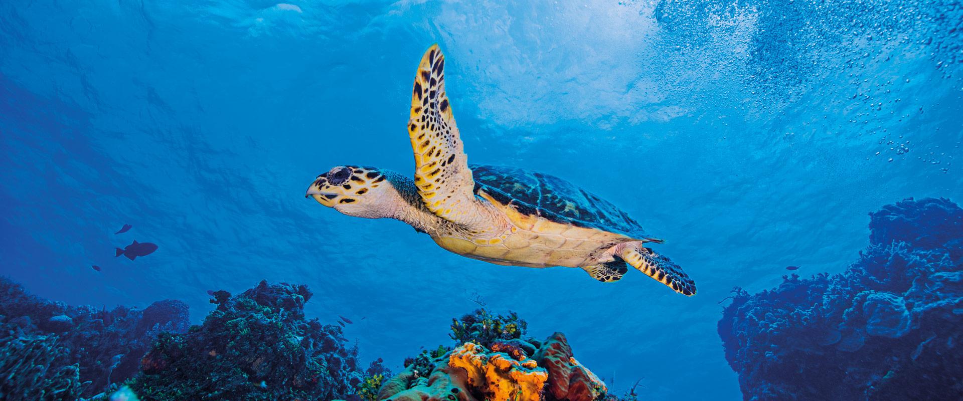 Cozumel, vida subacuática
