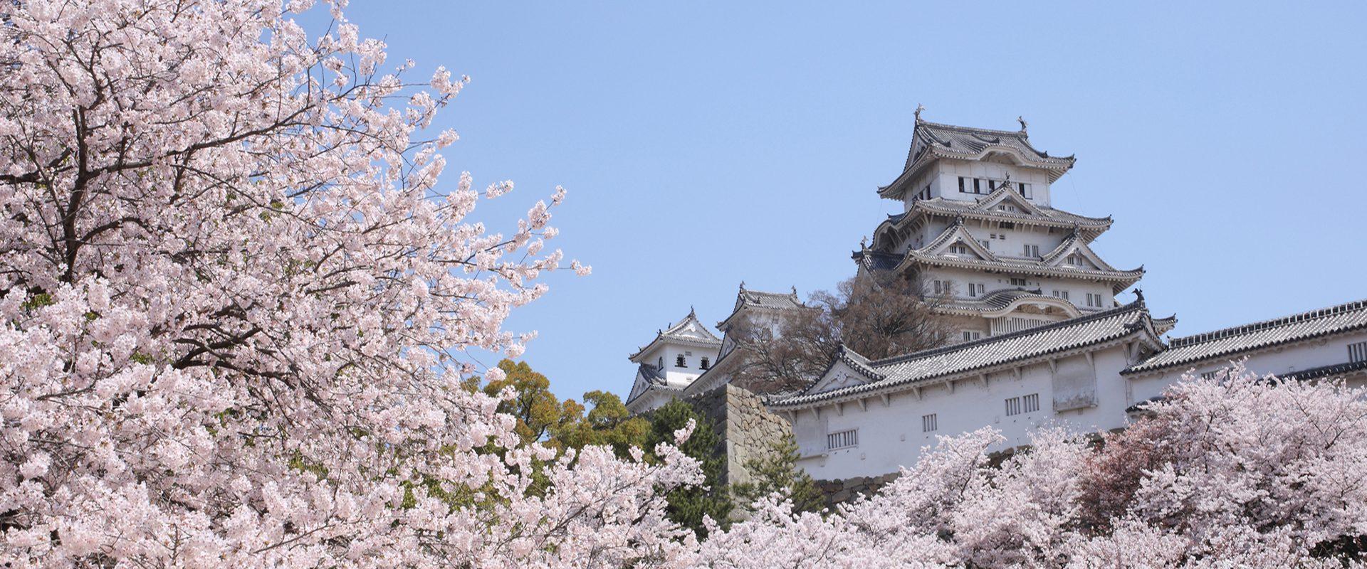 Los 10 mejores lugares de Japón para ver el cerezo en flor