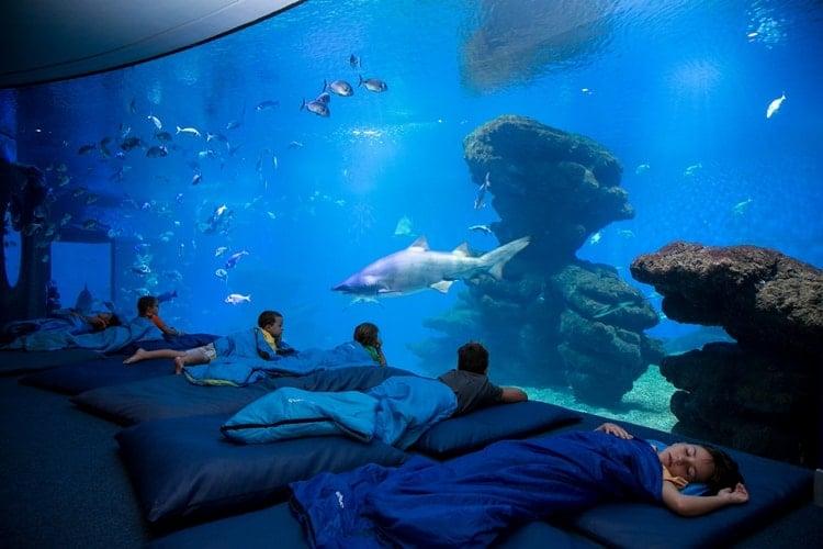 Jueves bajo el mar con Palma Aquarium: Los tiburones.