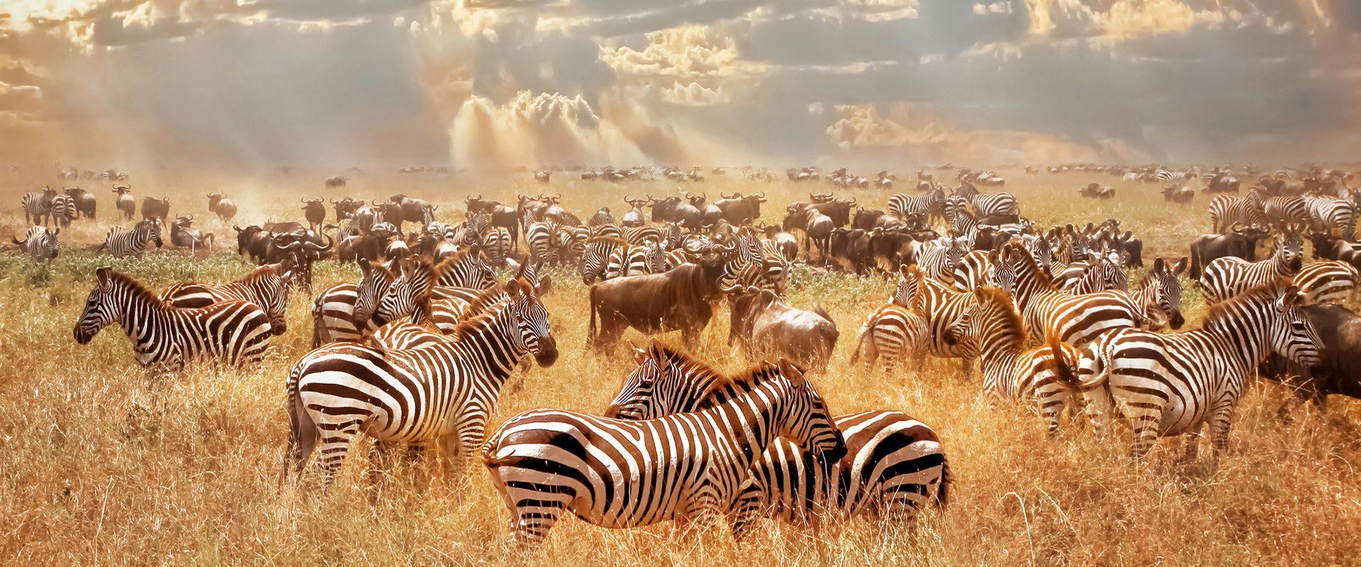 Kenia y Zanzibar - Viajeros con B