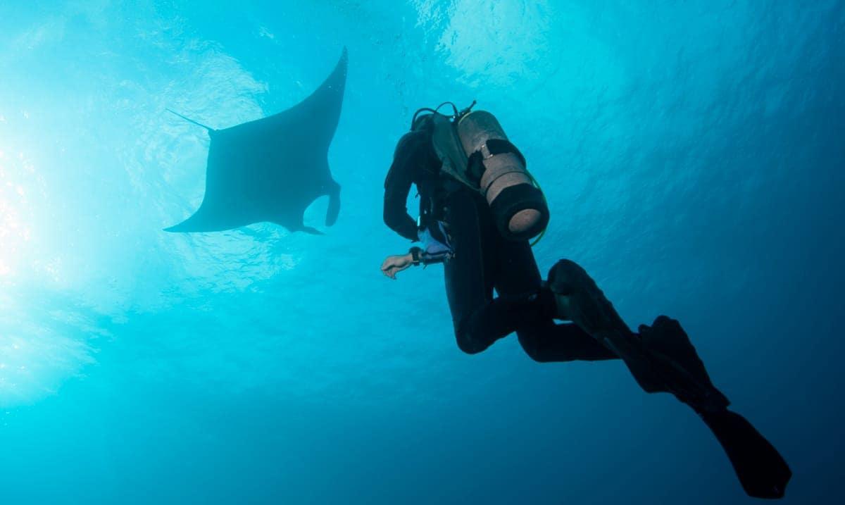 Tres lugares únicos para bucear con tiburones con Karlos Simón