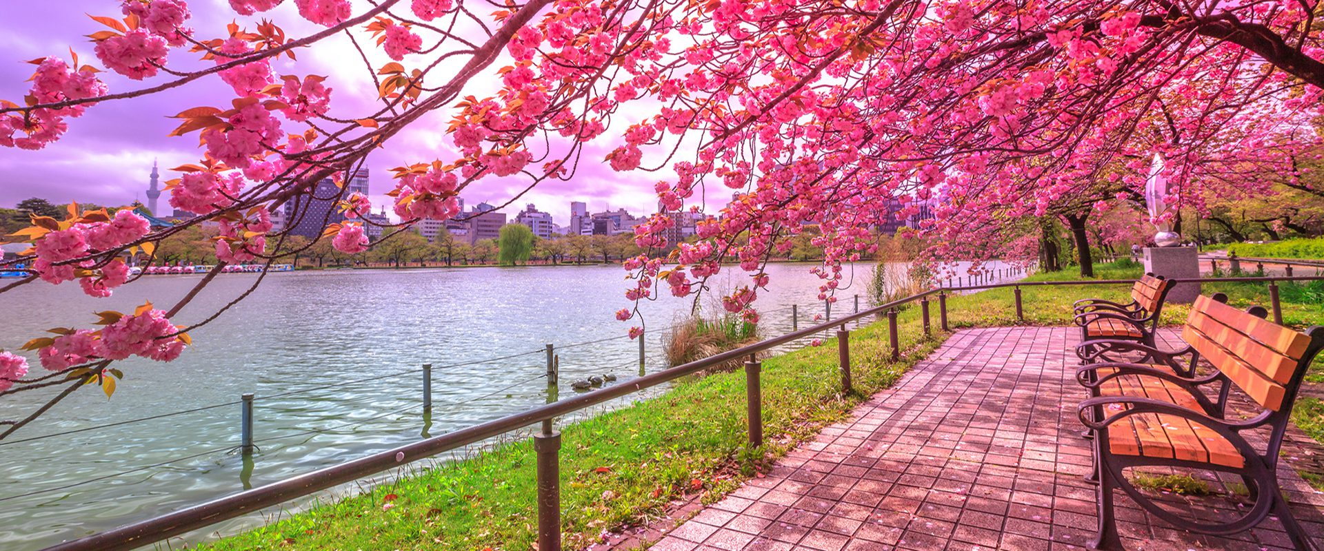 Arbol De Cerezo Japones los 10 mejores lugares de japón para ver el cerezo en flor