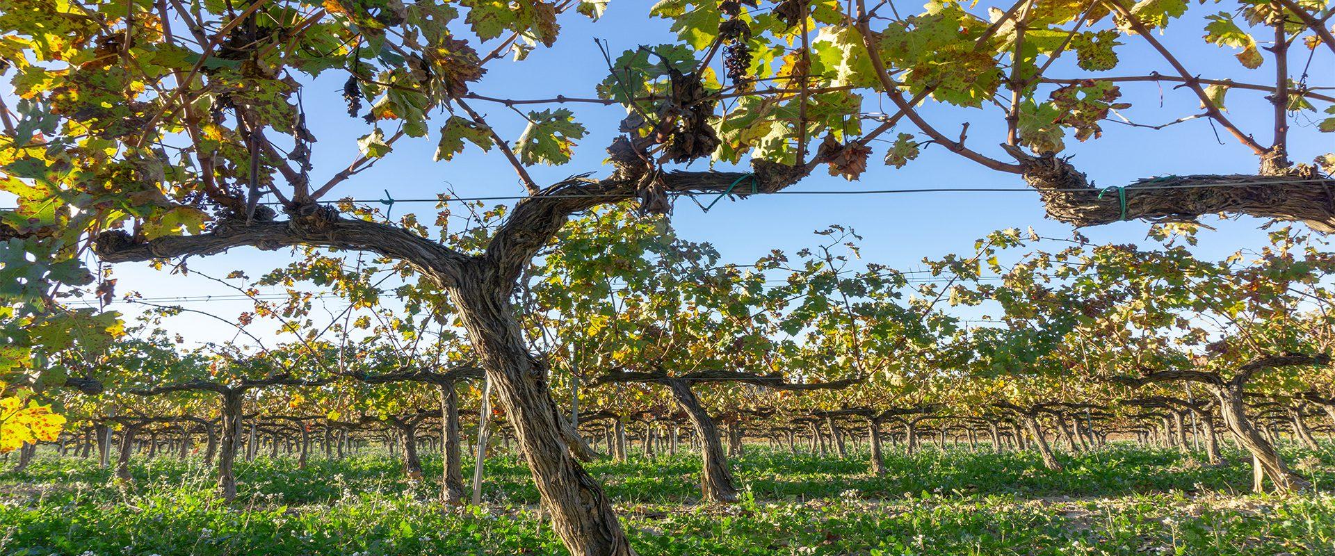 Las mejores fiestas del vino en España.