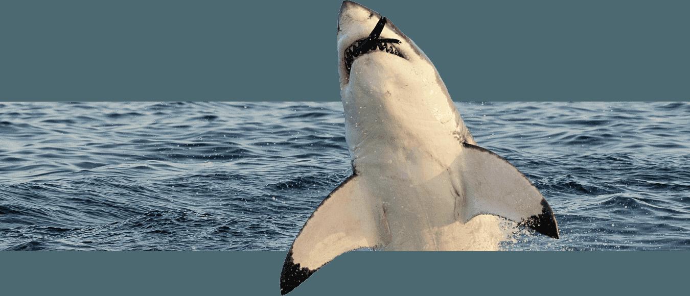 sudafrica-tiburon