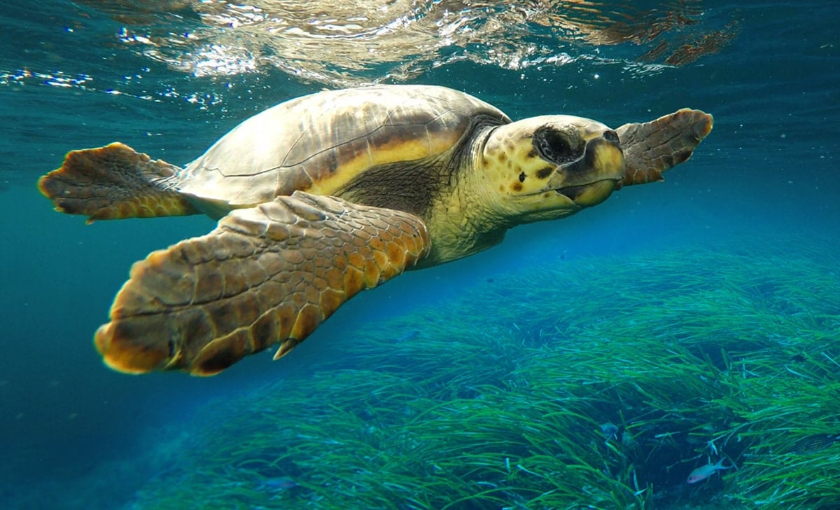 Jueves bajo el mar con Palma Aquarium-Tortugas y cetáceos.