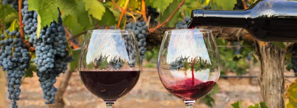 Es tiempo de las mejores fiestas del vino de España.